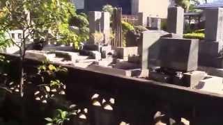 http://www.shoinjinja.org/ 『松陰神社』(東京世田谷)ー吉田松陰神社...