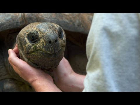 Do Tortoises Like Being Touched?