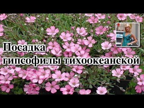 Каталог садовые многолетники Луковицы и корневища