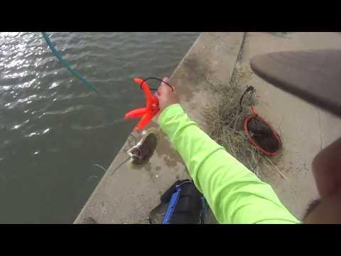 Seawolf Park Galveston, TX MONSTER 25 INCH FLOUNDER CAUGHT! [Pelican Bridge] (1080P HD)