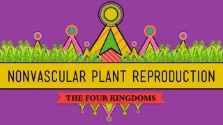 The Sex Lives of Nonvascular Plants: Alternation of Generations - Crash Course Biology #36