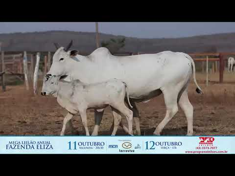 LOTE 211
