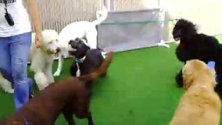 Dog Boarding, Dog Daycare And Dog Training In South Florida