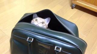 funny cat in my bag(AUG 27, 2013 20:03 - 20:05)