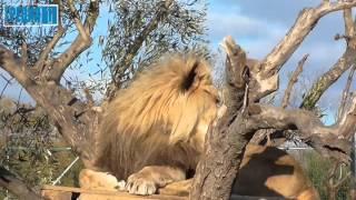 Афинский зоопарк (Спата) видео-экскурсия(Прогулки по Греции, Афинский зоопарк (Спата)., 2015-12-24T14:47:43.000Z)