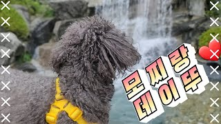 모망라토TV_데이뚜데이뚜~ / 푸들 고양이가족, 실버푸…