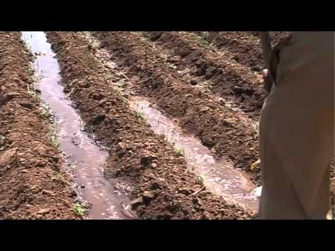 Can Africa's farmers cope with climate change