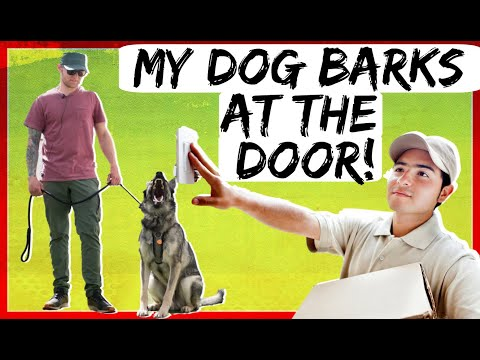How to stop my dog from barking at the door| How to stop my dog from barking at the doorbell
