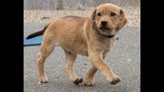 Приют для животных в Эшвилл. Где живут бездомные собаки и кошки в Америке.