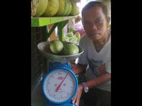 Organic Mango Production Farming in the Philippines