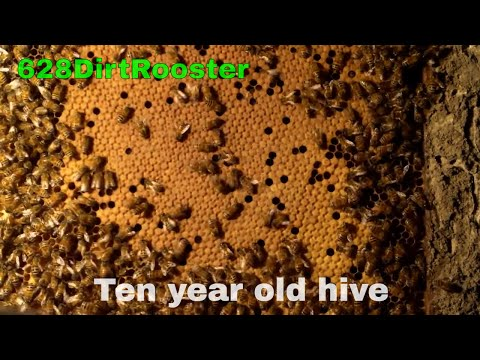 Removing Hurricane Katrina Bee Hive