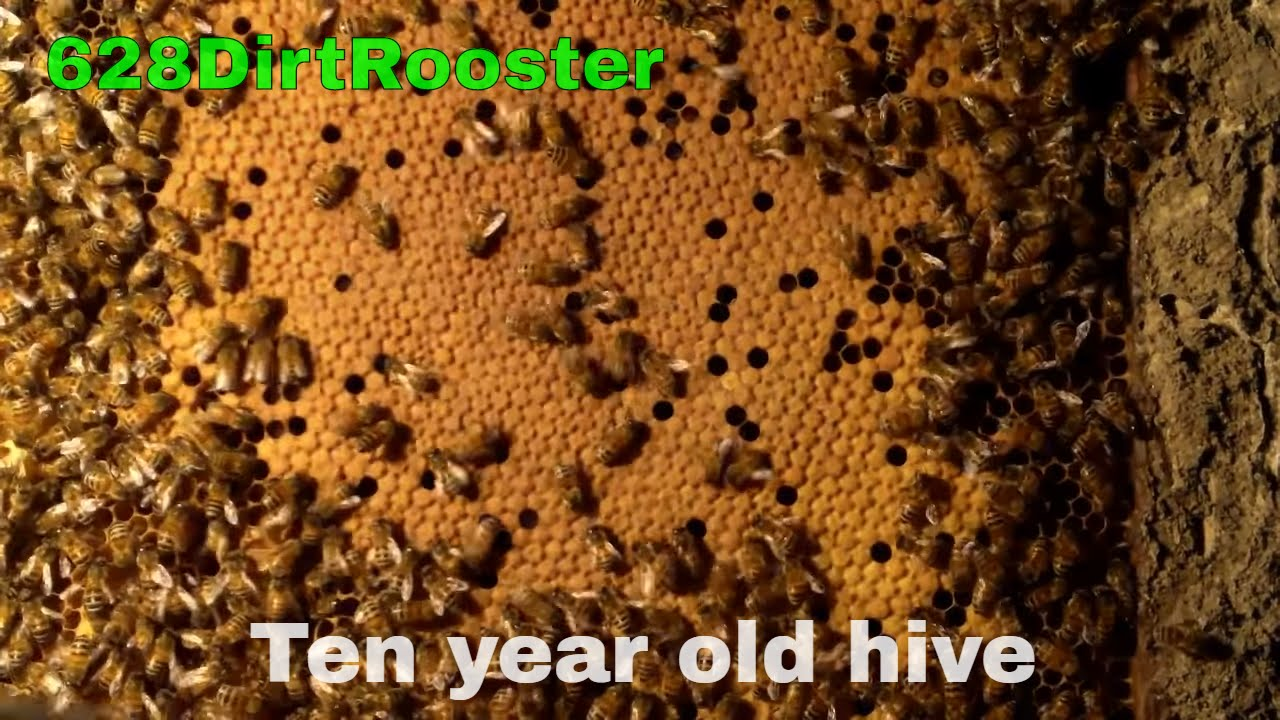 removing hurricane katrina bee hive youtube