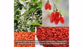 ягоды годжи 1 кг цена