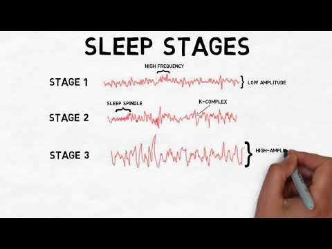 2-Minute Neuroscience: Stages of Sleep