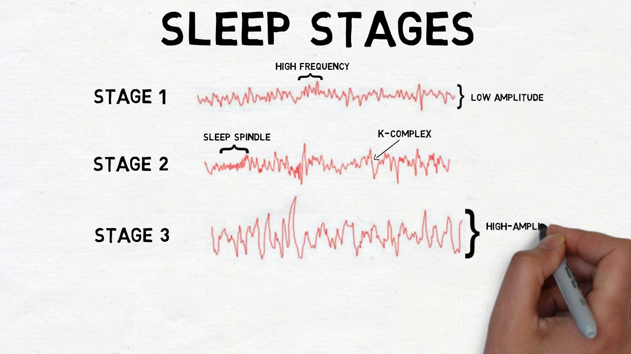 2-Minute Neuroscience: Stages of Sleep