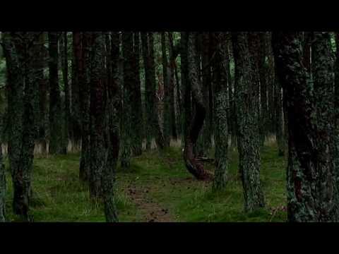 Gamtos anomalijos: paslaptingas šokantis miškas