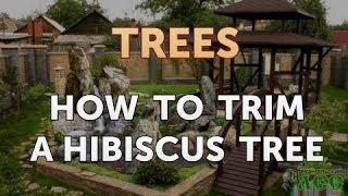 How to Trim a Hibiscus Tree