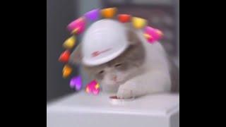 "Cat meme edit! Lil Boom - ""Already Dead "" instrumental"
