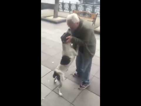 David Black - Man & Dog Reunited After 3 Years