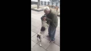 Video: Se reencontró con su perro tres años después de haberlo perdido