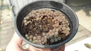 Tanaman Hias Kaktus Mini