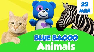 Animal Songs and Games | Blue Bagoo - English Nursery Rhymes and Kids Songs