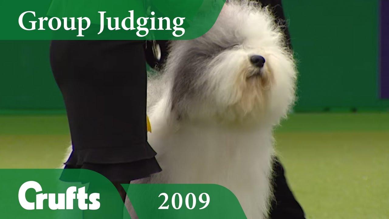 Old English Sheepdog wins Pastoral Group Judging at Crufts 2009 | Crufts  Dog Show