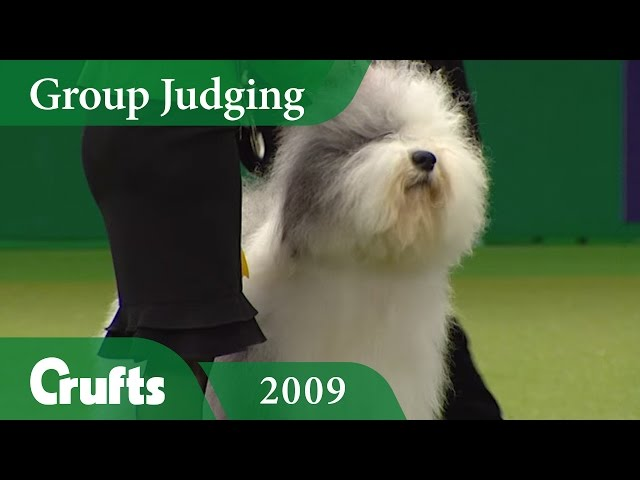 Old English Sheepdog wins Pastoral Group Judging at Crufts 2009 | Crufts Classics