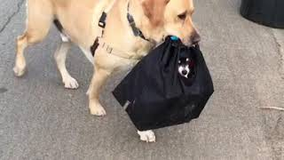 Dog Carries Little Buddy in Bag - 983015
