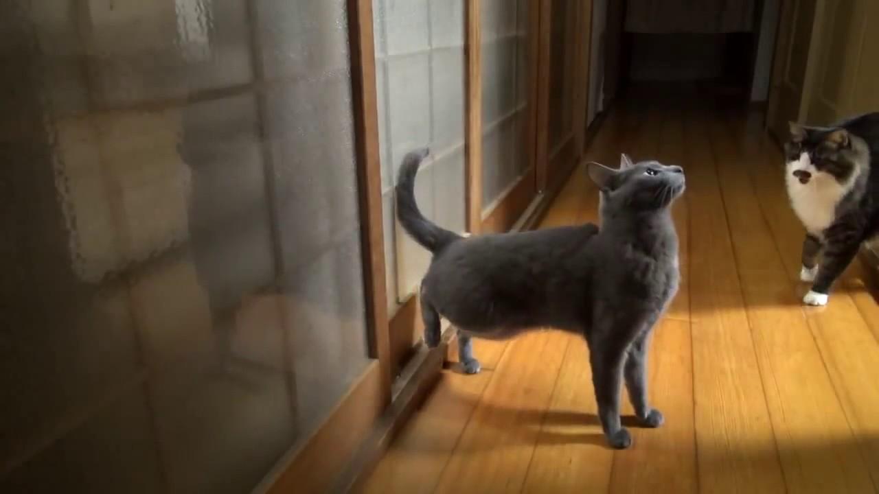 Кот стучится в двери