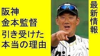 阪神タイガース 金本知憲が監督を引き受けた本当の理由 チャンネル登録...
