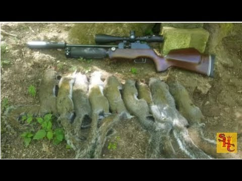Pest Control with Air Rifles - Squirrel Shooting - Squirrel Hill Pt 4