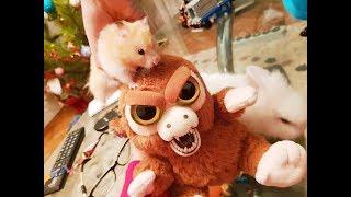 Хомка, зайка и злая обезьяна! Веселые животные! Домашние питомцы. Хомки