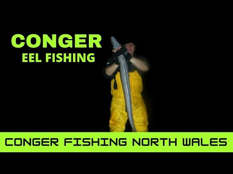 Conger Fishing Anglesey.