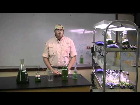 Growing algae for fuel: Supplies