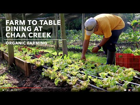 Belize Travel Video Guide - Organic Farming & Dining at Chaa Creek