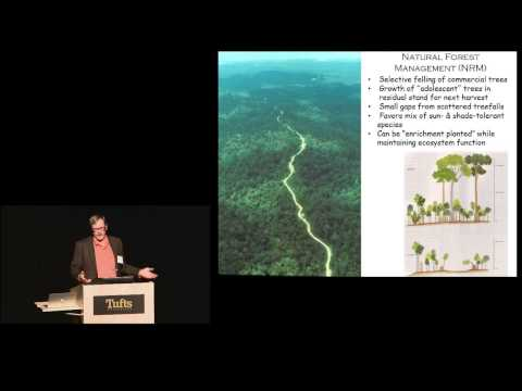 Mark Leighton - Forests: A Pivotal Player