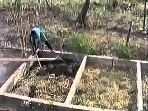 Growing Spirulina In Africa