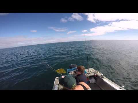 waitemata harbour fishing new zealand