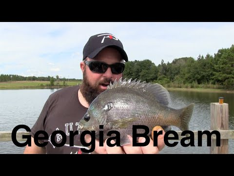 Pond Fishing For Georgia Bream