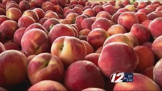Fruit Recall: What to do if you ate the recalled fruit