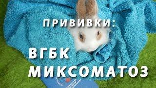 Обязательные прививки для кроликов (от ВГБК и Миксоматоза)