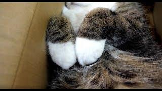箱で寛ぐねこ2。-Maru is relaxed in the box 2.-