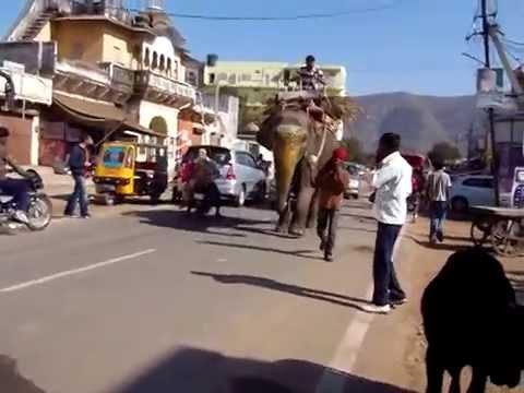 Camels, cows & elephants! Pushkar, India (Rajasthan)