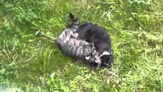 bloody cat fight кровавая борьба кошек