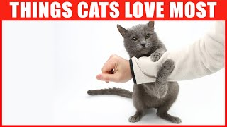 11 Things Cats Love the Most