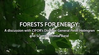 Forests and Energy: What's the connection?
