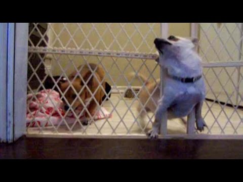 Puppy Sacrifices Himself to Save Friend