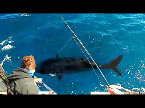 146KG TUNA SNAPS OUR ROD... BUT...
