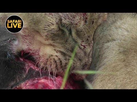 safariLIVES: Episode 32